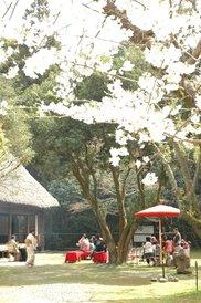総合博物館「民家園春まつり」