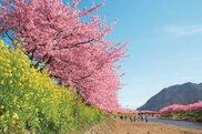 第28回河津桜まつり