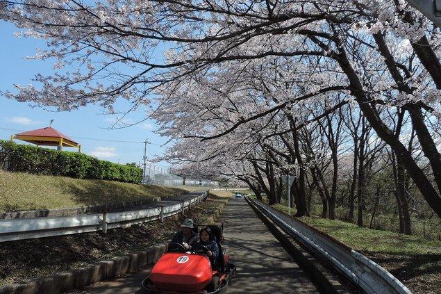 千葉こどもの国KidsDomの桜