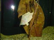 開館35周年春休み特別展「水中のそっくりさんとたすけ合う魚たち」