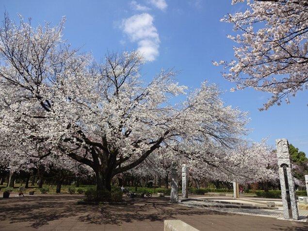 武蔵野公園の桜の紅葉
