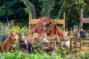 どうぶつたちの棲む森 はしもとみお木彫りの世界展