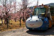 淡路島国営明石海峡公園 夢ハッチ号で河津桜咲く春一番の丘へ