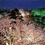 【桜・見ごろ】朝日山公園