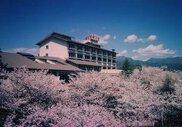 【桜・見ごろ】神の湯温泉100本の桜