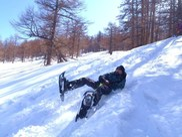 「雪の森 そり遊び アドベンチャー」軽井沢 バックカントリー  ソリ滑り