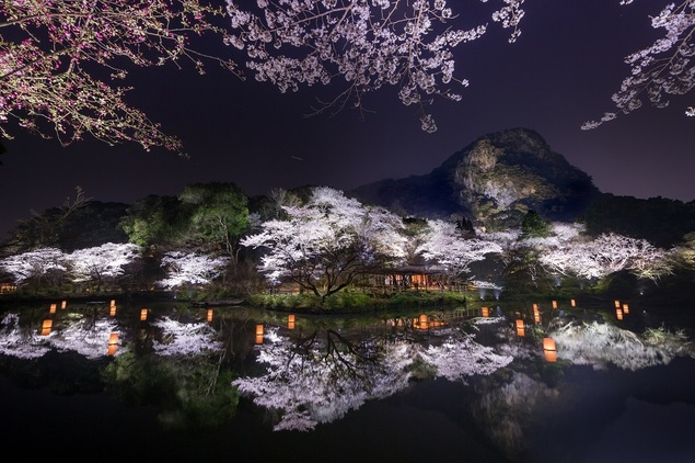 御船山楽園の桜