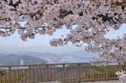 【桜・見ごろ】瀬戸内海国立公園 高見山