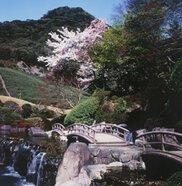 【桜・見ごろ】慧洲園