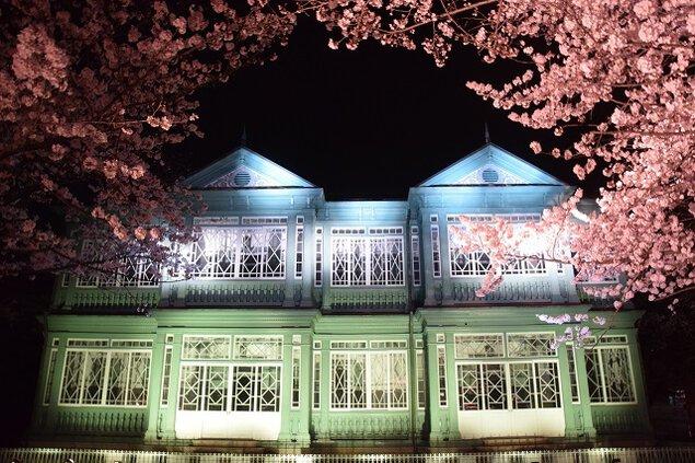 神戸市立王子動物園の桜