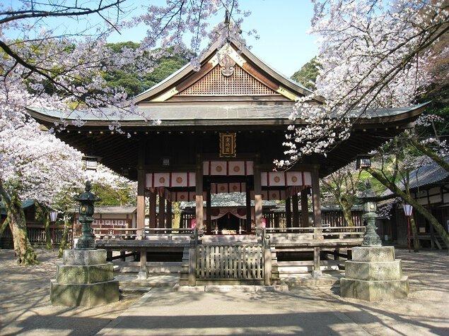 金崎宮(金ヶ崎公園)の桜