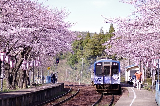能登さくら駅(能登鹿島駅)の桜