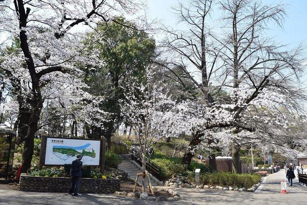 大田区多摩川台公園の桜