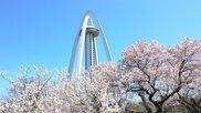 138タワーパーク さくら祭り