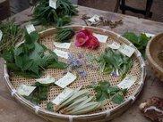 エコツアー「ユガテの春を楽しむ~観察会と山菜採り~」