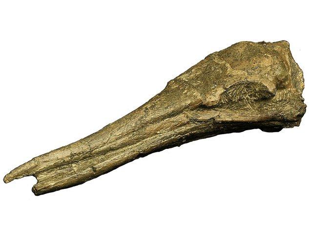 第85回特別展 高浜の化石 -1600万年の時を越えた大地の語り部-