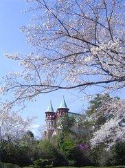 【桜・見ごろ】博物館明治村