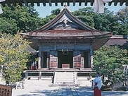 【桜・見ごろ】気多大社のシロギクザクラ
