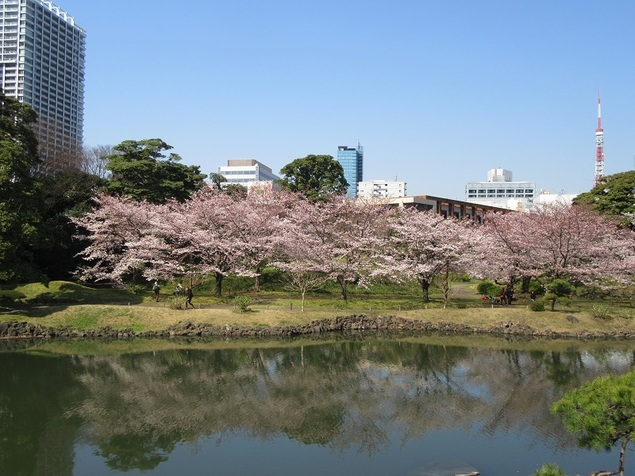 旧芝離宮恩賜庭園の桜
