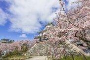 【桜・見ごろ】豊公園