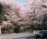 【桜・見ごろ】延命公園