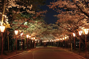 日岡山公園「ぼんぼり」ライトアップ