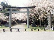 【桜・見ごろ】大分県護国神社