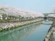 【桜・見ごろ】平和市民公園