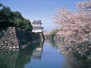【桜・見ごろ】大分城址公園 外苑