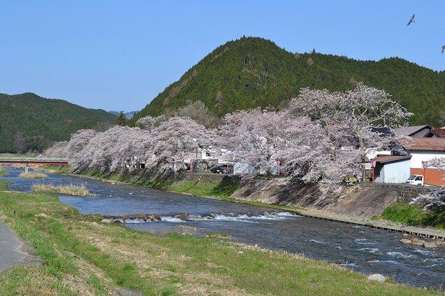 農村型リゾート クリエイト菅谷の桜