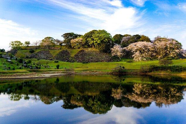 名護屋城跡の桜