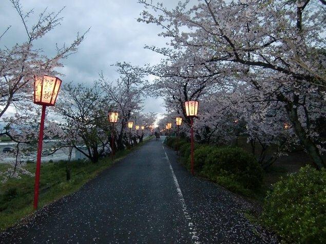 武丈公園の桜