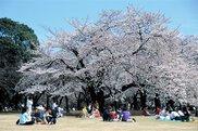春の特別開園