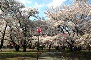 すすきヶ原入野公園 春まつり