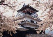 城山公園桜まつり