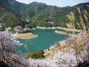 春一番!第11回こしのお春まつり&桜ウォーキング大会