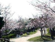 総合運動公園 桜!ノルディックウォーキング 須磨浦公園