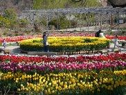 春の花まつり2018