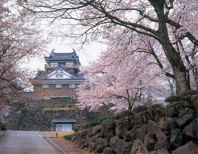 亀山公園の桜