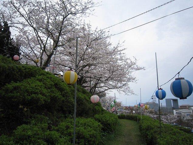 江津丸子山公園の桜