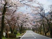 萩原桜並木