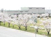 小郡駐屯地 桜並木一般開放