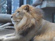ライオン・チャコのお誕生日会