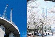 【桜・見ごろ】太田山公園