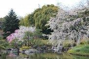 観桜会 花見茶会