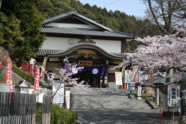 由加山蓮台寺の桜