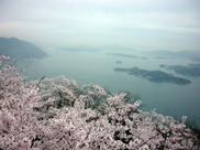 【桜・見ごろ】筆影山・竜王山