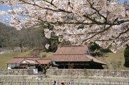 【桜・見ごろ】学びの原郷 旧閑谷学校