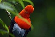 写真家たちの新しい物語 山口大志写真展「アマゾン-密林の時間」
