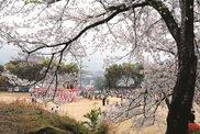 向山公園桜まつり